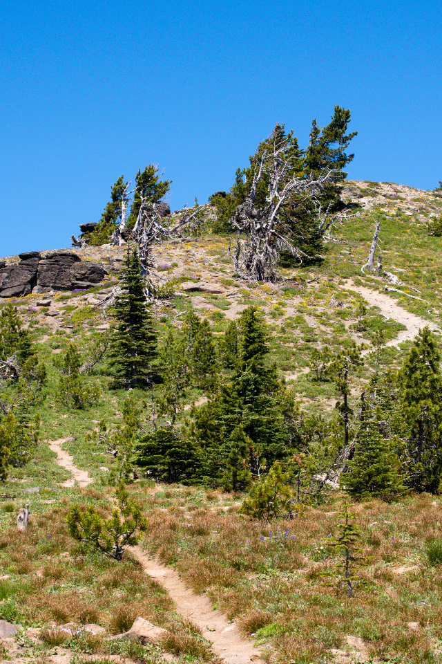 Approach trail to summit of Lookout Mountain
