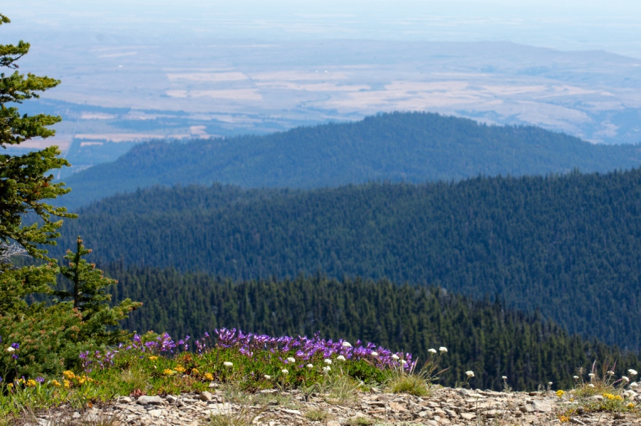 View of Central Oregon farm lands from Lookout Mountain