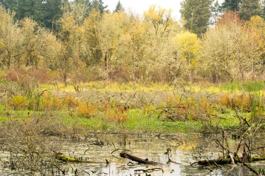 Marshy area along the trail