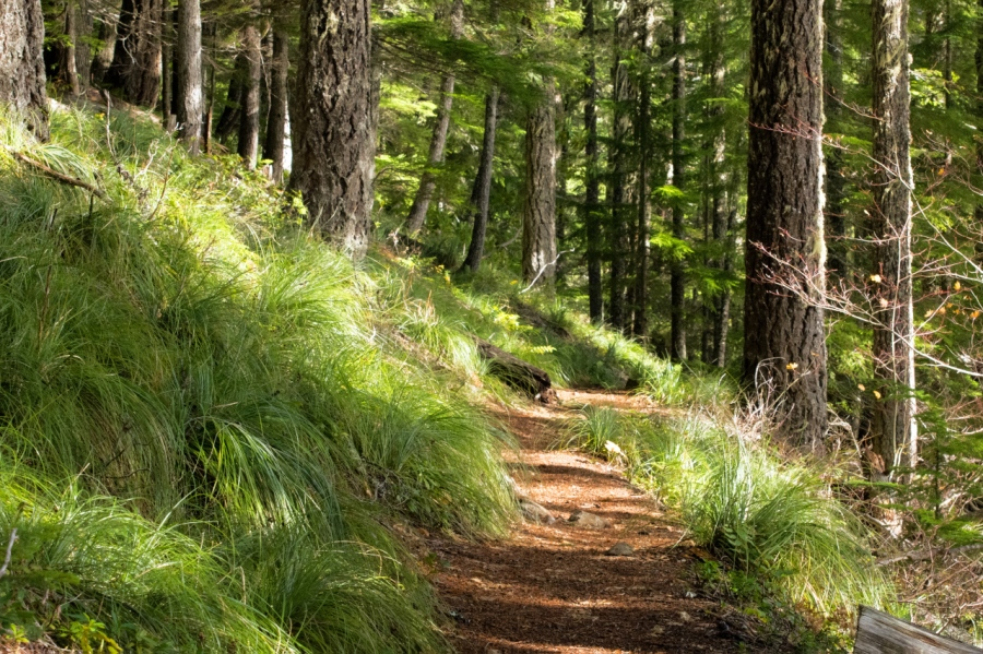 Pleasant stretch of trail lined by Beargrass