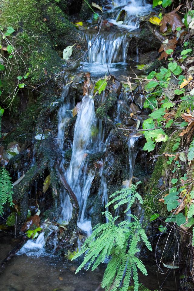Tributary of Hardy Creek