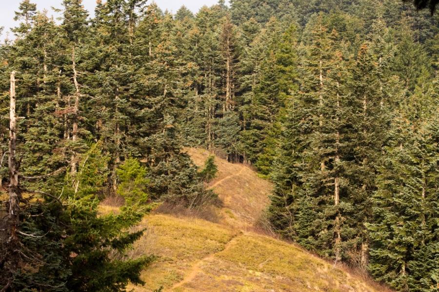 A pleasant stretch of the trail