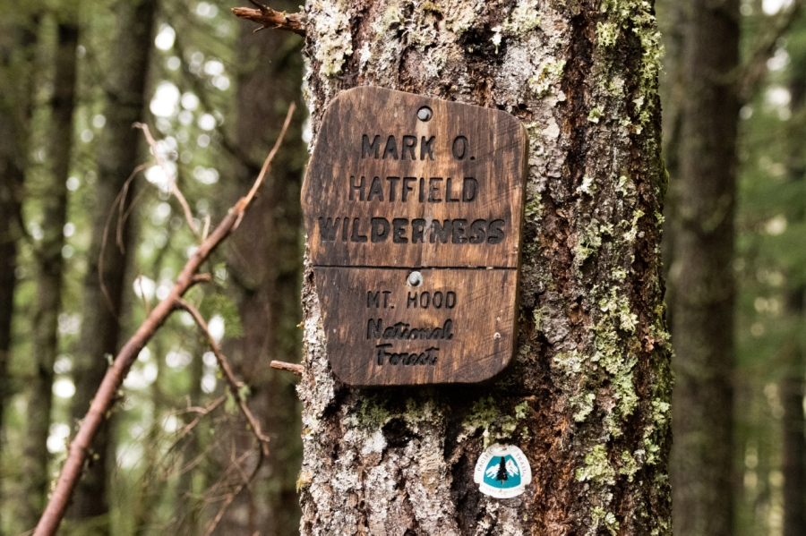 Into the wilderness on the Pacific Crest Trail