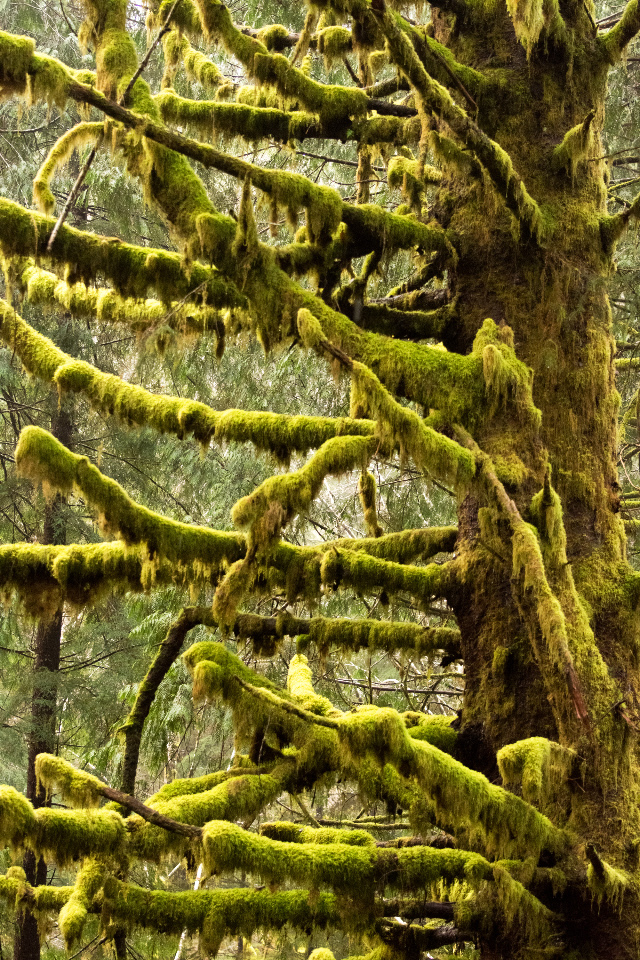 Moss and lichen decorating the trees