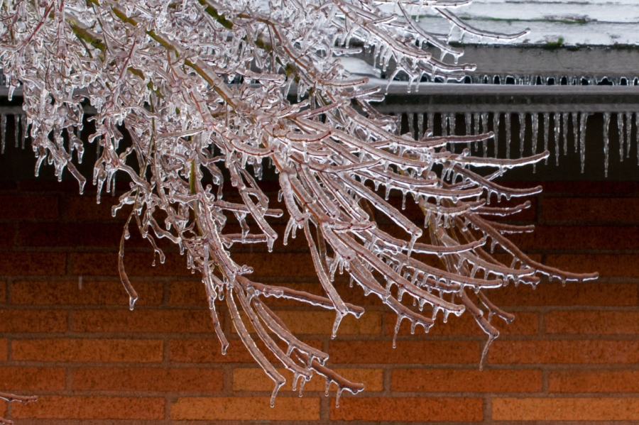 Branches sagging under the weight of the Silver Frost