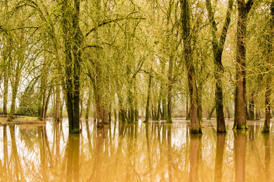 Trees learn to survive in the water in a floodplain