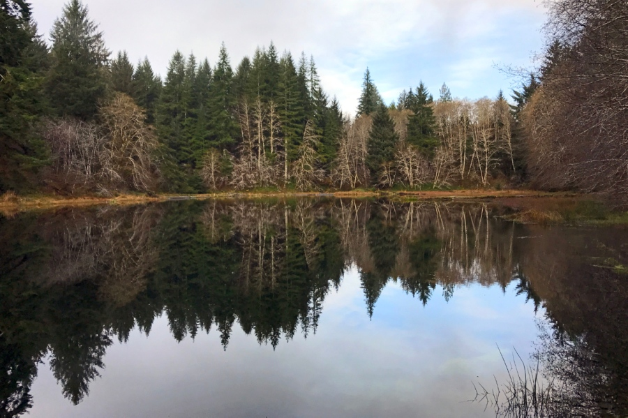 Soapstone Lake