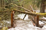 One of many fallen trees across the trail