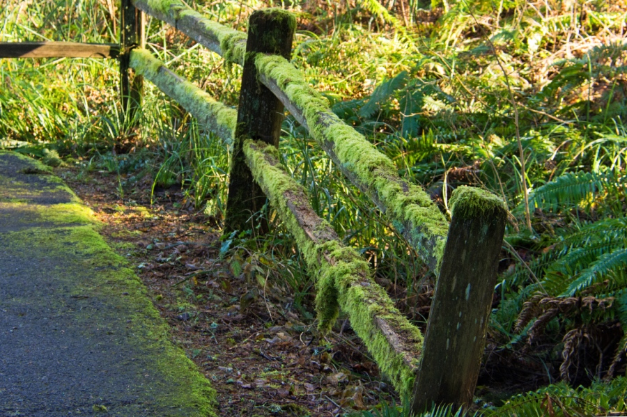 I always enjoy old moss-covered wooden fences