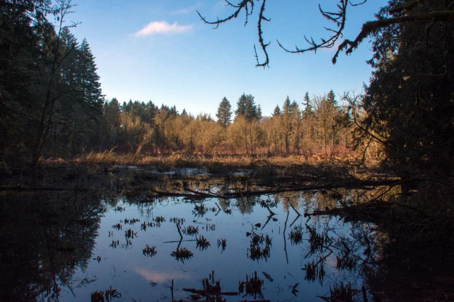 Pretty pond along the trail