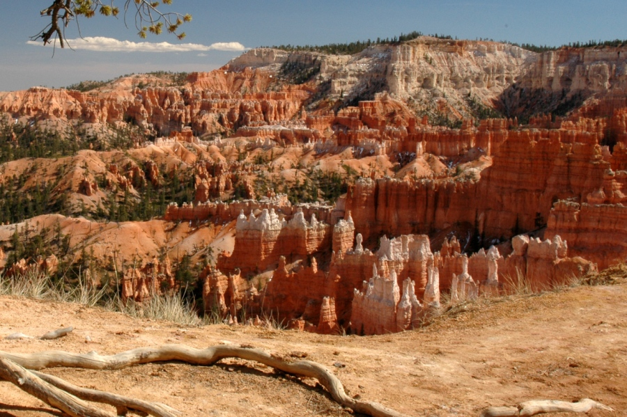 Exposed roots on the Bryce Canyon rim