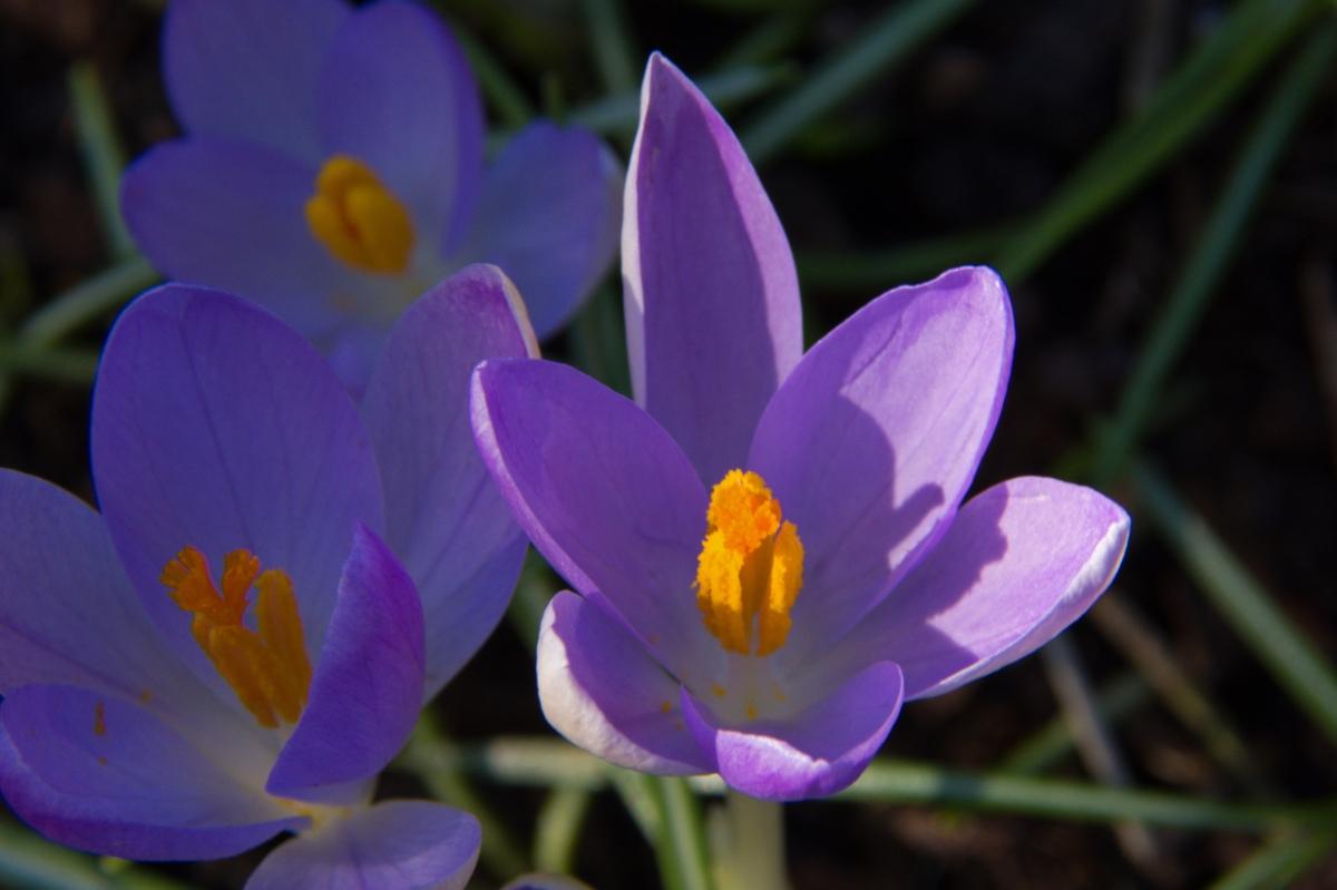 First Spring Flowers John Carr Outdoors