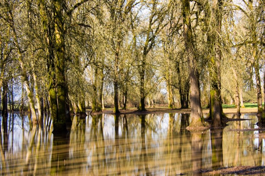 A wetland near the Trailhead