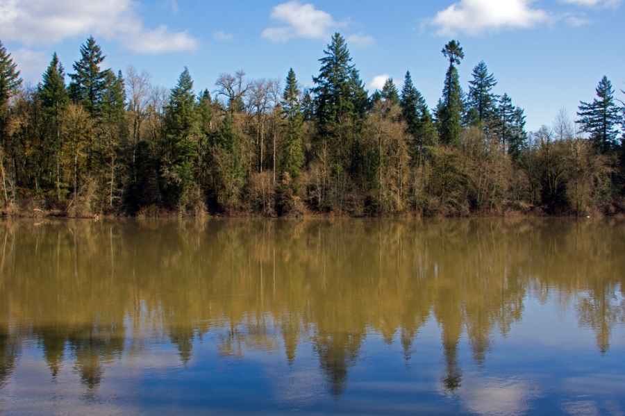 Reflections in the Willamette River
