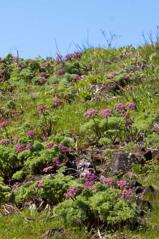 Memaloose Hills Early WildflowerHike