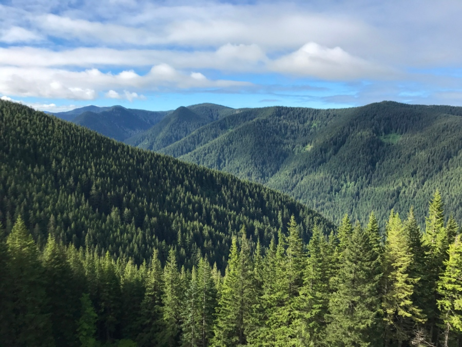 Hiking in the Salmon-Huckleberry Wilderness