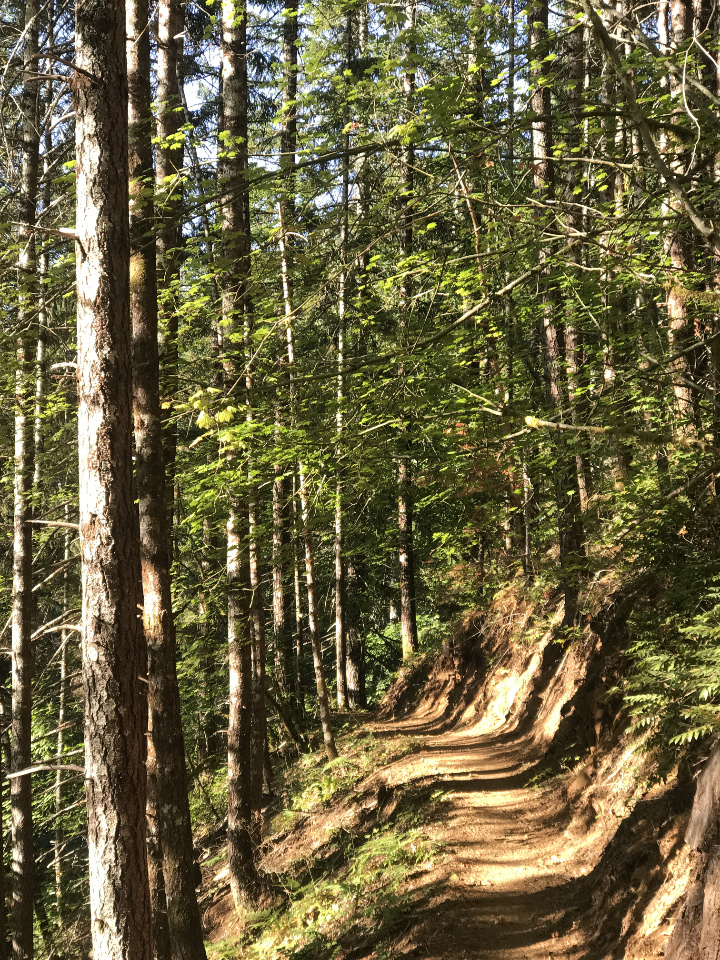 An Enjoyable Late Summer Hike in the Oregon Coastal Mountains