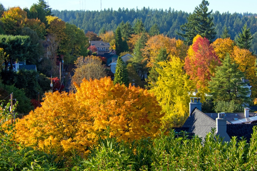 Colorful Autumn Leaves in Portland Heights