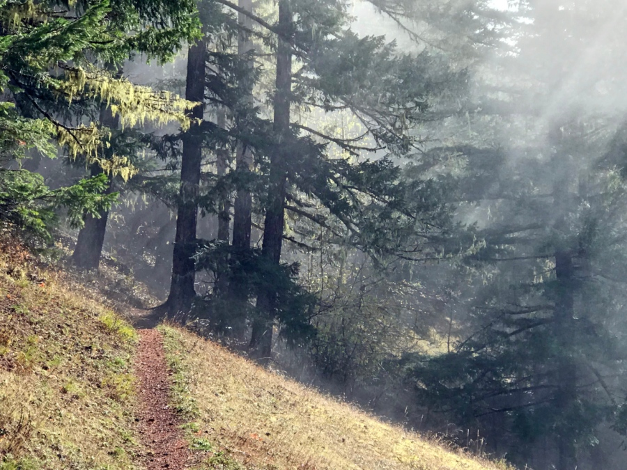 Salmon River Hike in the AutumnMist