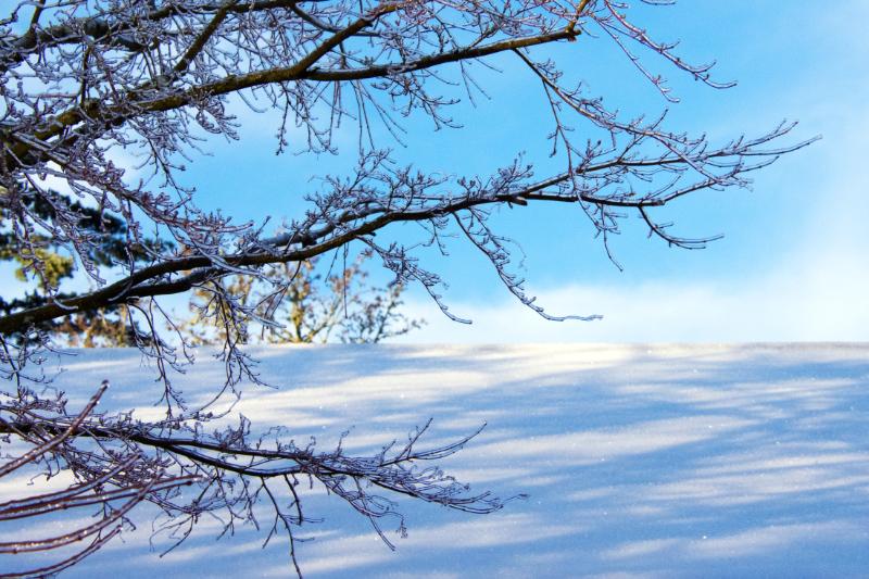Beauty and the Beast: Freezing Rain inPortland