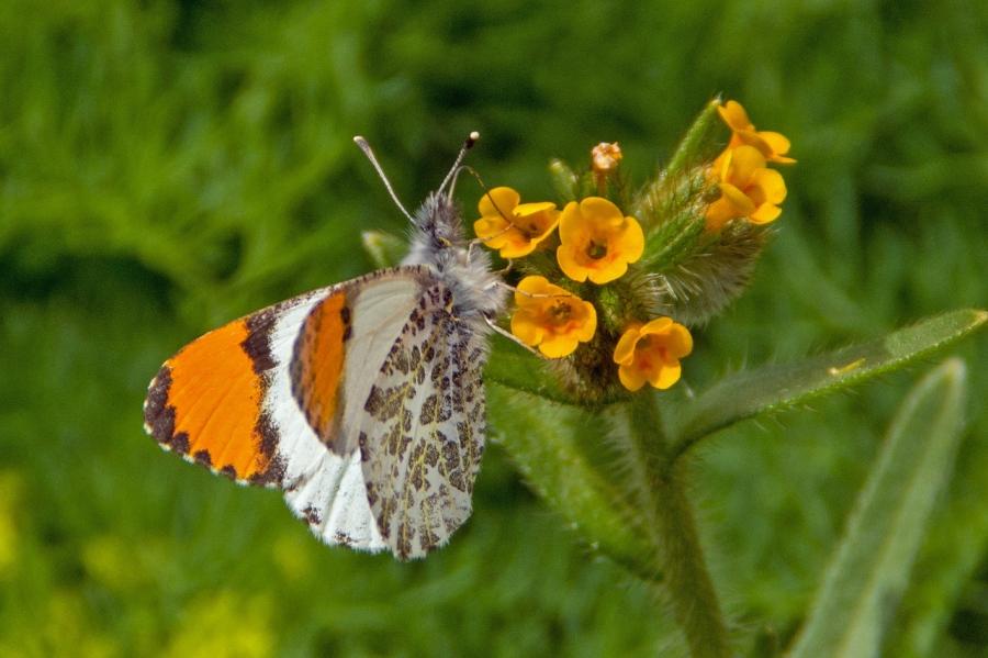 Beautiful Spring Butterflies