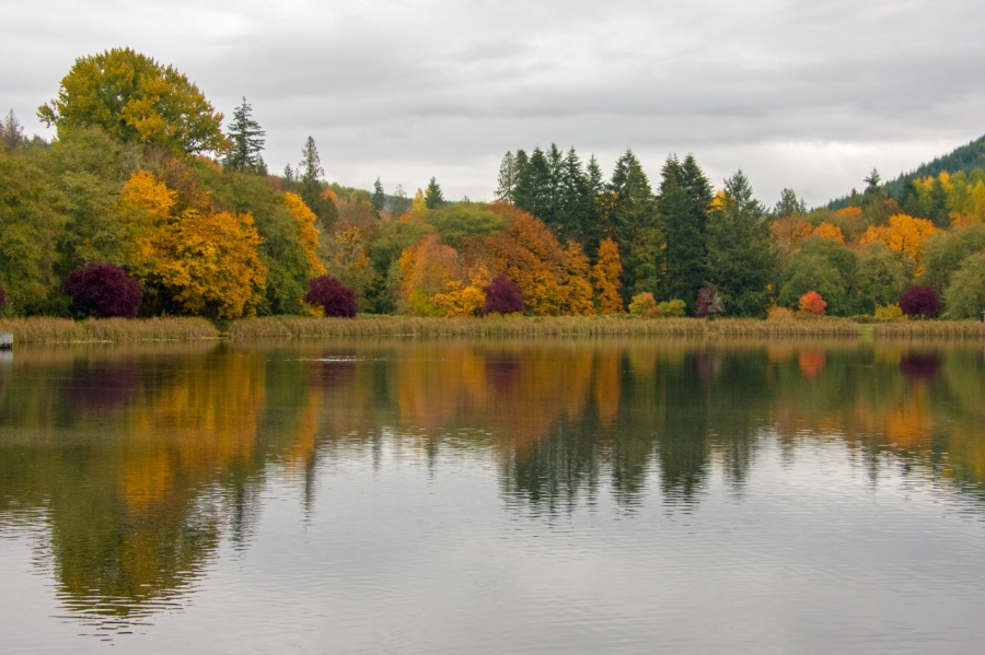 A Rainy Autumn Day at Vernonia Lake