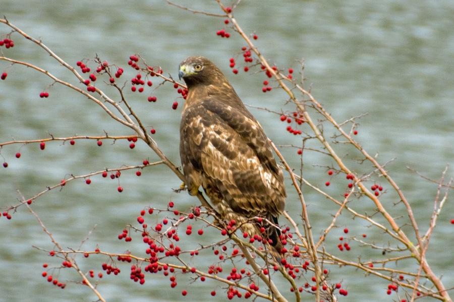 Bald Eagles and Sandhill Cranes at VirginiaLake