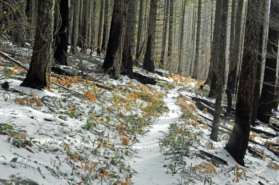 Surveying Wildfire Damage in the Herman CreekDrainage