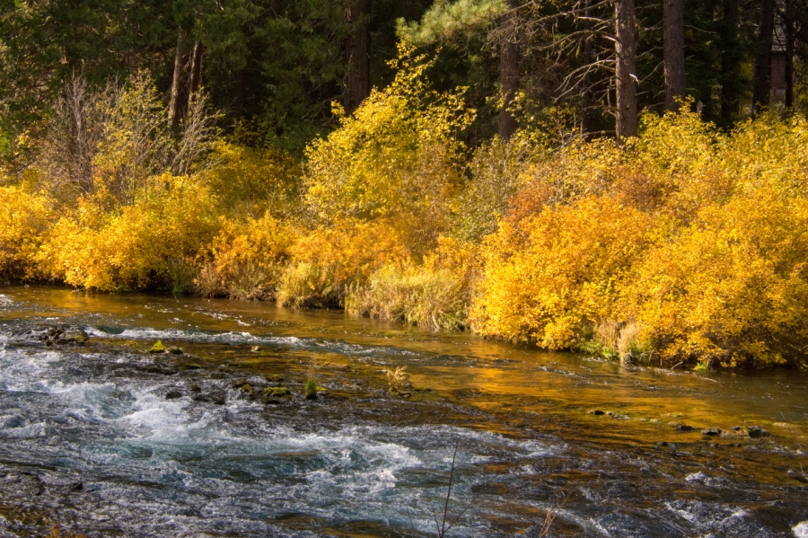 Metolius River Graced with Gorgeous Autumn Foliage
