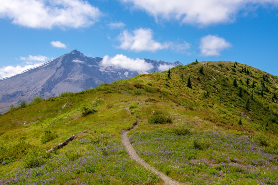 Harry's Ridge: A Stark but Beautiful Hike into the Mount St. Helens Blast Zone
