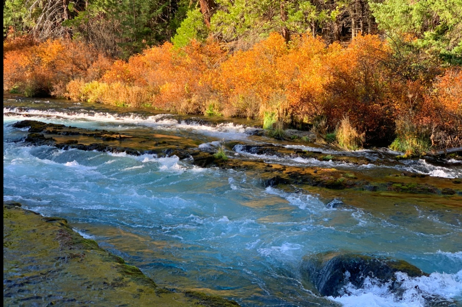 Fall Foliage on the Metolius River