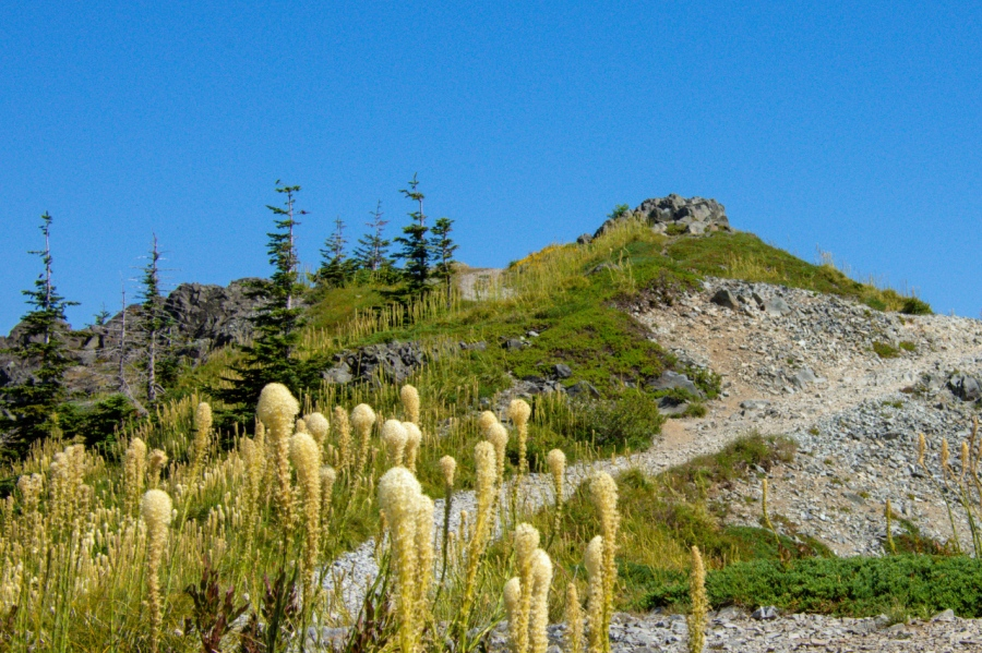 Silver Star Mountain: A Truly Special Place toVisit